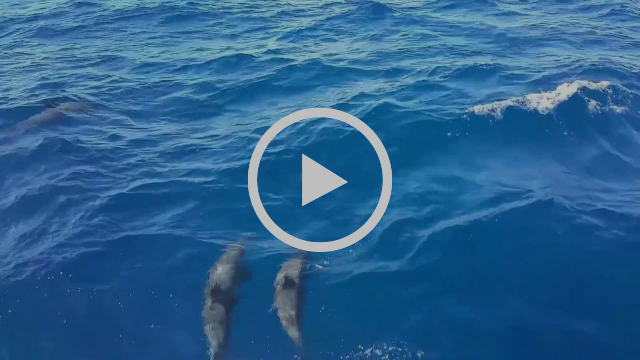 Click for video: Dolphins near Saba
