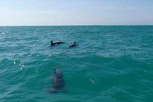 dolphins-key-west-402866-300