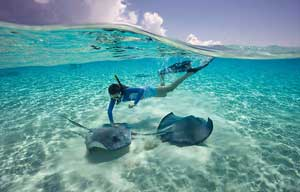 snorkeling-sting-rays-300